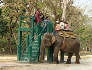 Asien Reise Elefant